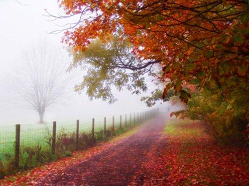 Őszi fotózási tippek