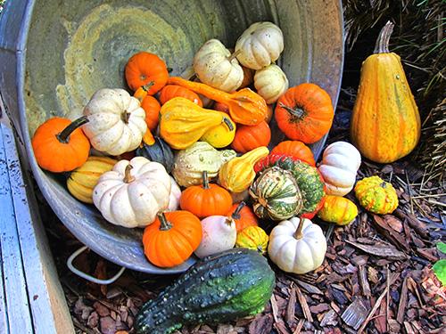 Fotózási tippek őszre