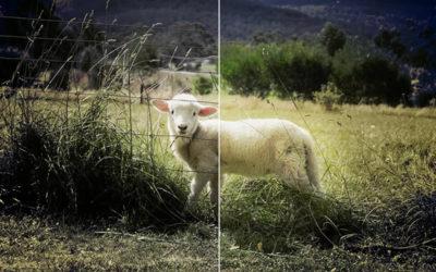 Volt kerítés nincs kerítés